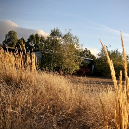 Grasses in Autumn in Daylesford for filming and photoshoots with Spaces n Places location agency